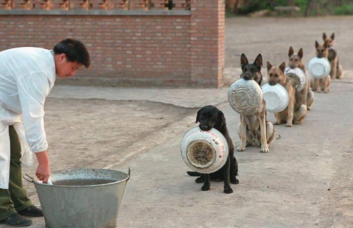 Policajné psy čakajúce na jedlo