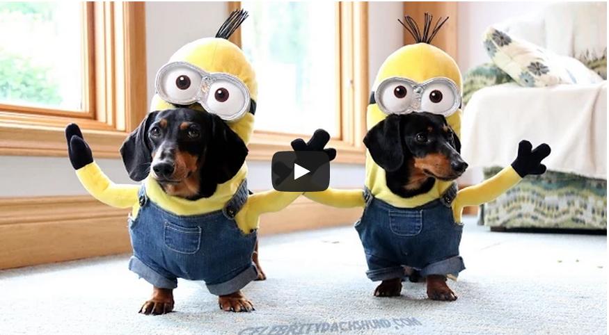psí mimoni