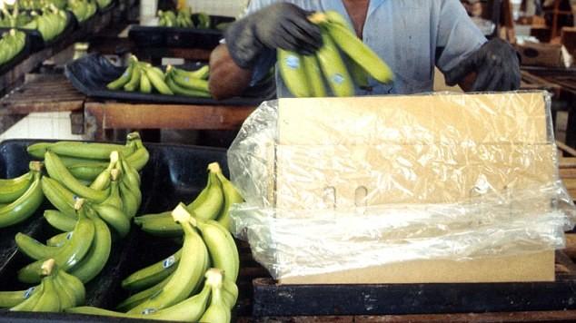 banány kokain