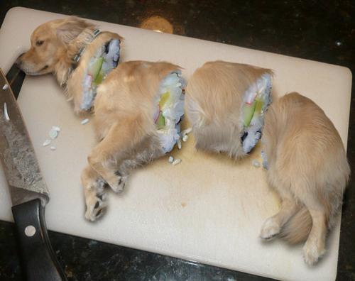 pes je jídlo
