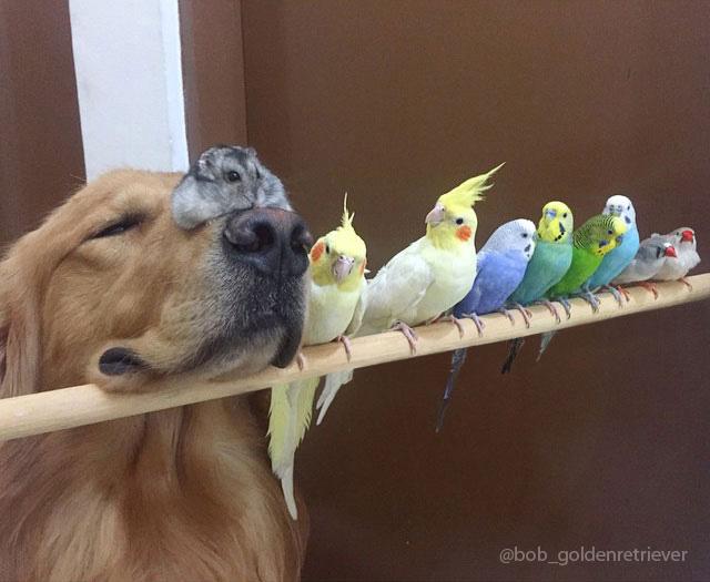 zvieracia rodinka