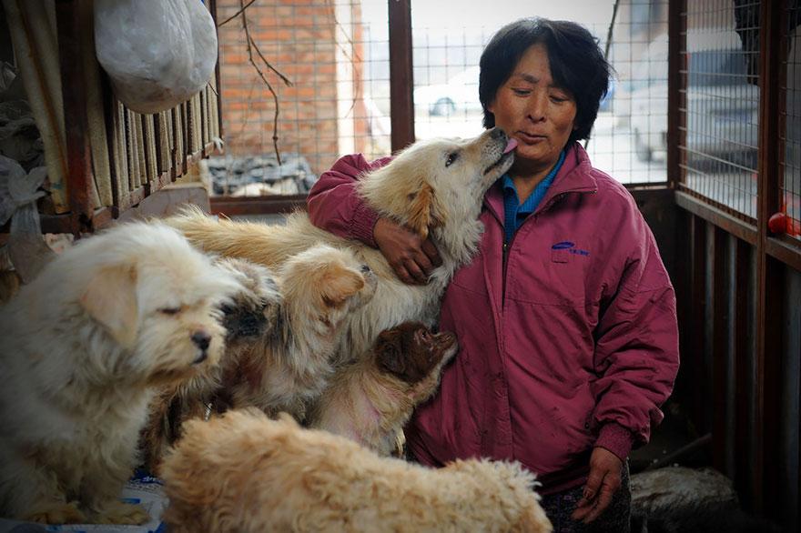 zachránila psov