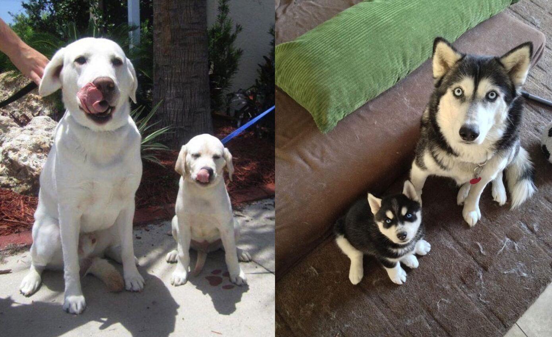fotografie psích rodiniek