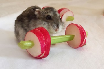 We-Made-A-Vegetable-Gym-For-Tiny-Hamsters-Who-Hate-Gyming-__880