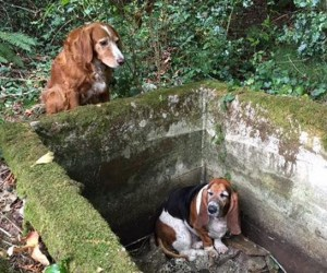 dog-guards-friend-trapped-help-arrives-2