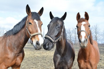 horses-671611_1280