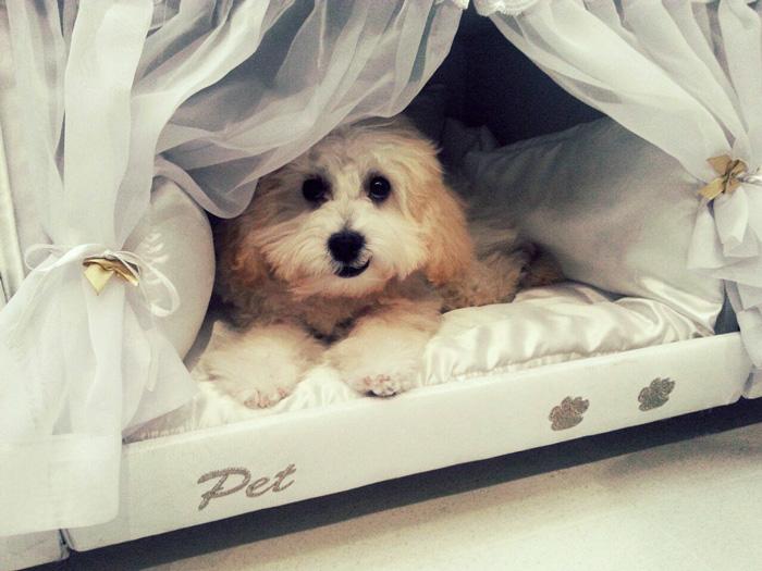 pet-bed-inside-mattress-colchao-inteligente-postural-15