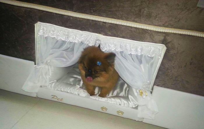 pet-bed-inside-mattress-colchao-inteligente-postural-20