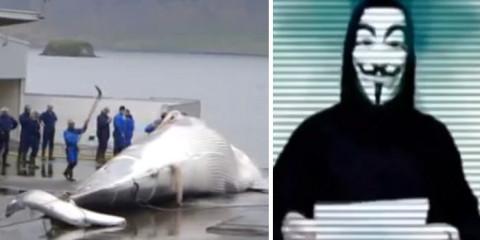 anonymous zachraňuje veľryby