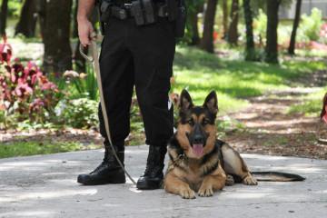german-shepherd-police-dog-and-handler