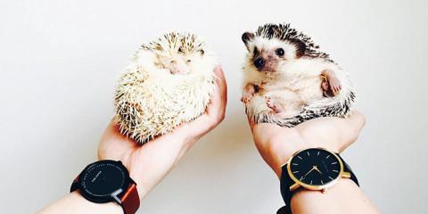 cute-hedgehogs-33__700