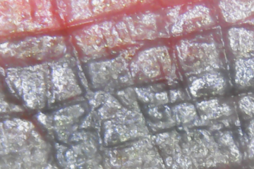 microscope-tattoo