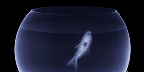 animal-x-rays10
