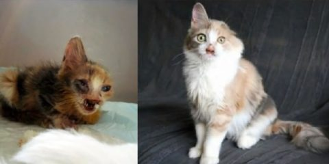 girl-saves-disfigured-cat