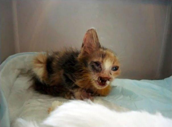 girl-saves-disfigured-cat-istanbul-01