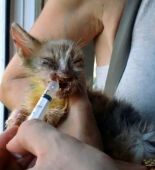 girl-saves-disfigured-cat-istanbul-04