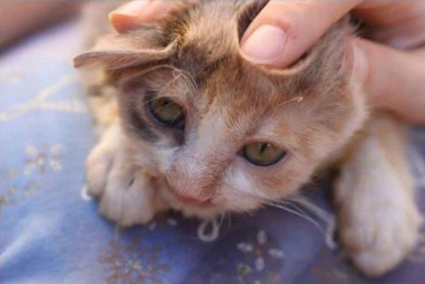 girl-saves-disfigured-cat-istanbul-07