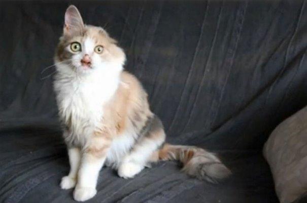 girl-saves-disfigured-cat-istanbul-09