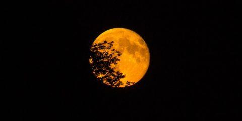 super-moon-966848_960_720