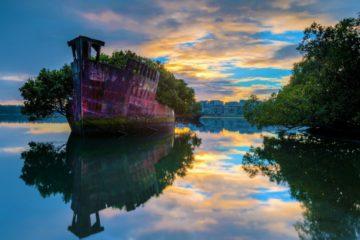 939805-barco-bosque2-1000-9d9af92f29-1484221939