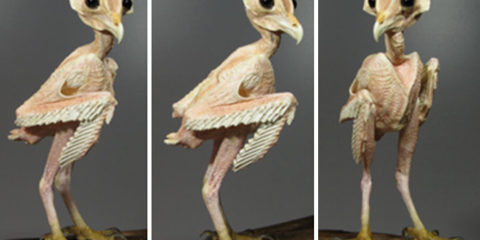 owls-without-feathers-17