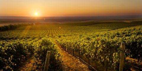 columbia-crest-winery-2-600x400