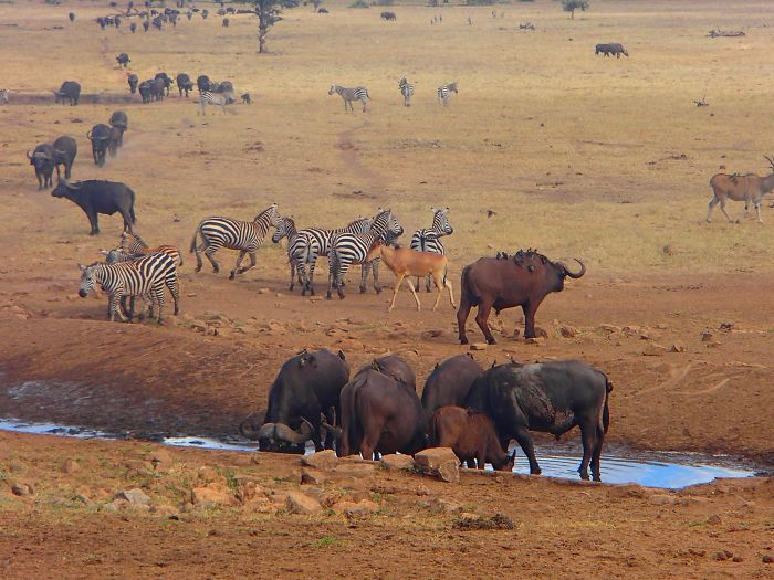man-brings-water-wild-animals-kenya-16-58aac704e53f2__700