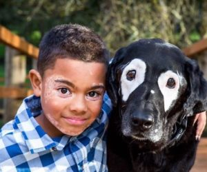 boy-dog-skin-disorder-vitiligo-carter-oregon