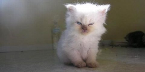 angry-kittens-2-591aec462619a__700