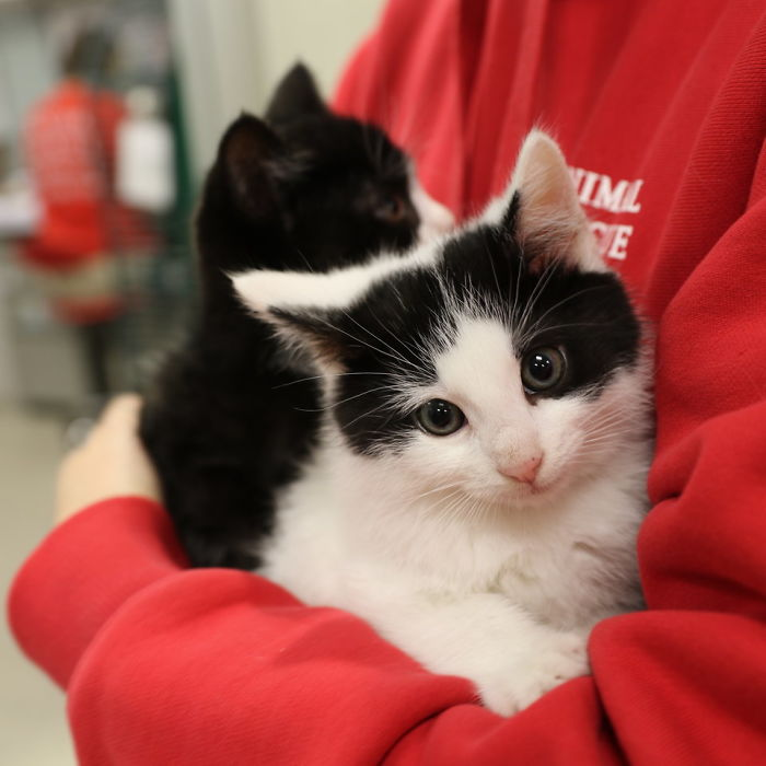 just-cats-vet-clinic-hires-cat-cuddler-7-5927e7e3c33c3__700