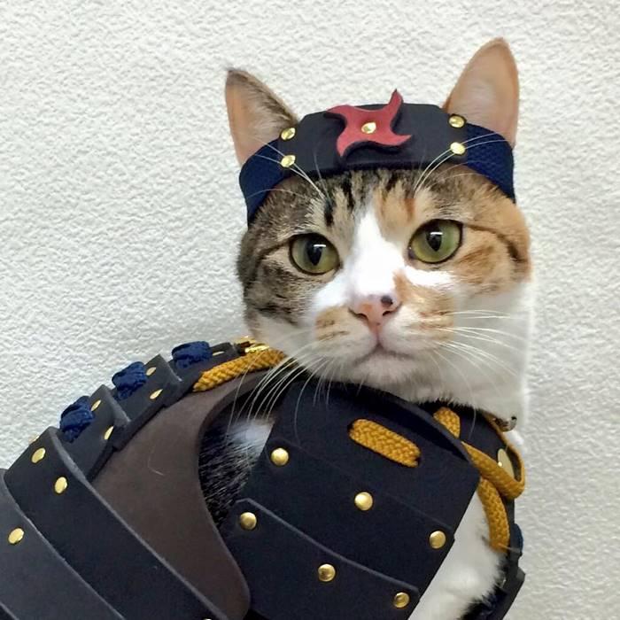 pet-dog-cat-armor-samurai-age-japan-1