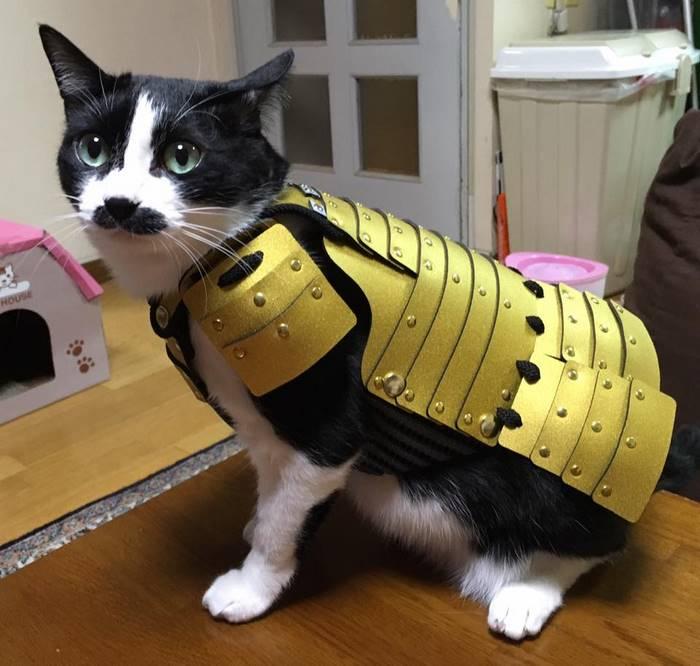 pet-dog-cat-armor-samurai-age-japan-5