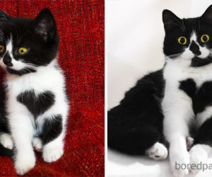 cat-growing-up-225-5996b49140418__700