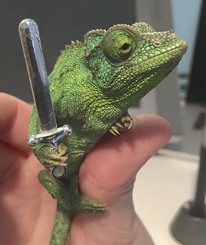 chameleons-holding-objects-emma-ward-1-599aa65a63d69__700