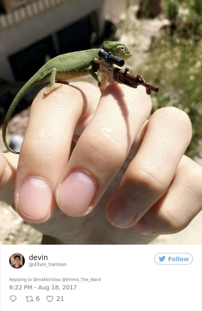 chameleons-holding-objects-emma-ward-599aa9e0cd4a8__700
