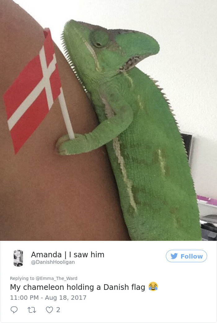 chameleons-holding-objects-emma-ward-599aa9e2a5ff1__700