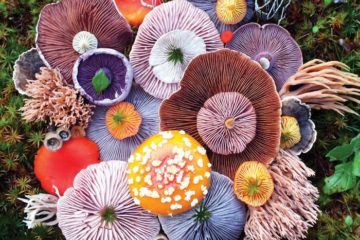 mushrooms-nature-medley-photos-jill-bliss-2-59895e1ca1c50__700