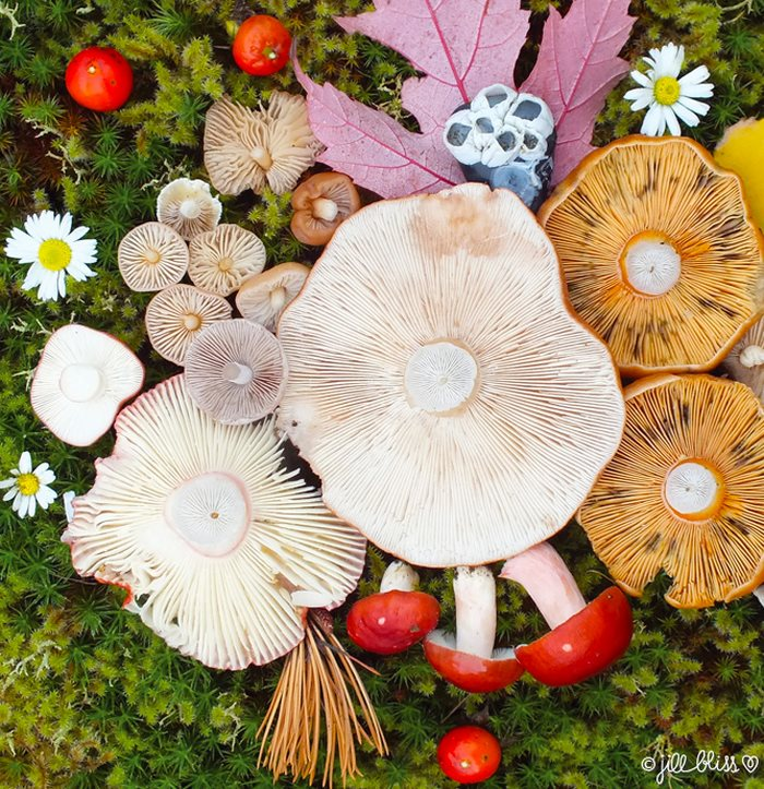 mushrooms-nature-medley-photos-jill-bliss-42-59895e7ea3b90__700