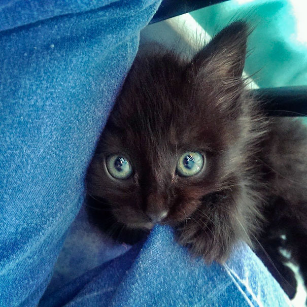 people-woke-up-to-funny-weird-pets-animals-146-59786689ce760__605