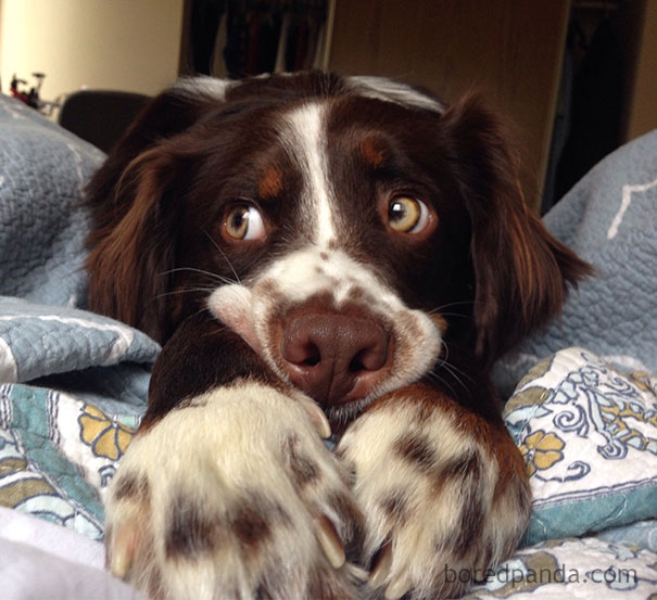 people-woke-up-to-funny-weird-pets-animals-91-59808c206732b__605