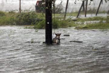 powerful-photos-hurricane-harvey-texas-17-59a52445f2d93__700