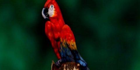 2296385_opticka-iluze-papousek