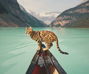 adventures-suki-the-cat-canada-45-59b297bce7a00__880