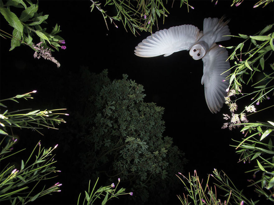 bird-photographer-of-the-year-2017-10-59acfca43823f__880