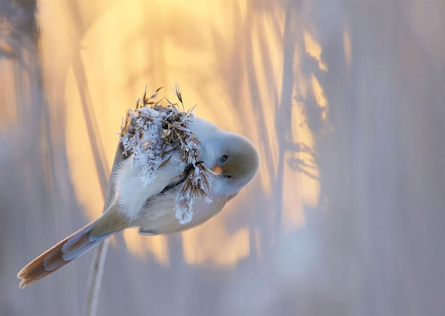 bird-photographer-of-the-year-2017-22-59acfcb81dead__880