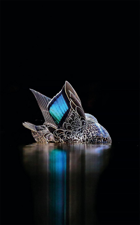 bird-photographer-of-the-year-2017-27-59acfcbf69f27__880