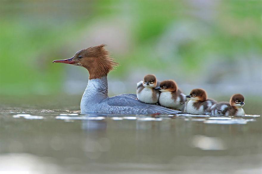 bird-photographer-of-the-year-2017-5-59acfc9b248a7__880