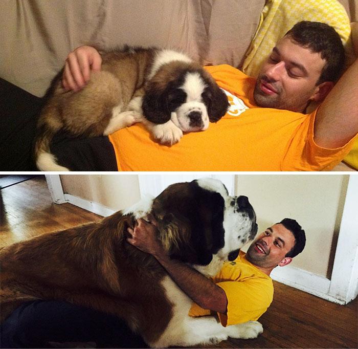 giant-lap-dogs-128-599c40d06298d__700