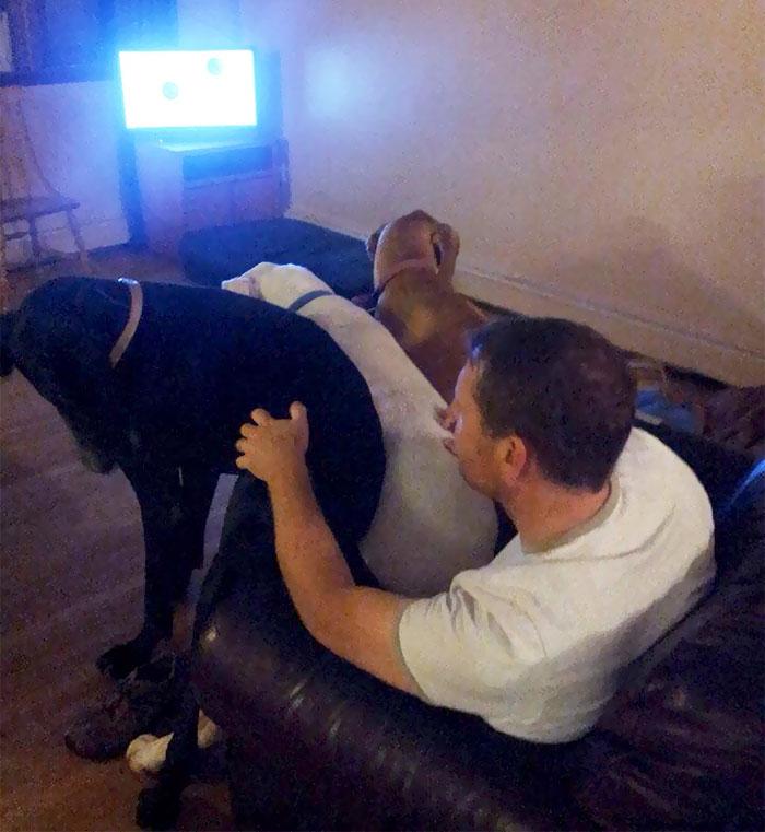 giant-lap-dogs-130-599c46fb61fe4__700