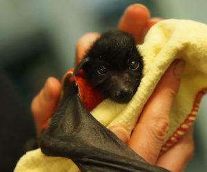 adorable-bats-18-59e5fdd758611__700
